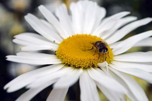 Bee Flower Seasons Summer Spring Animal Insects