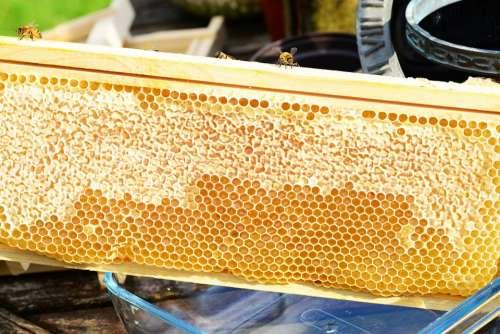 Bees On Frame Honey Honey Bees Honeycomb
