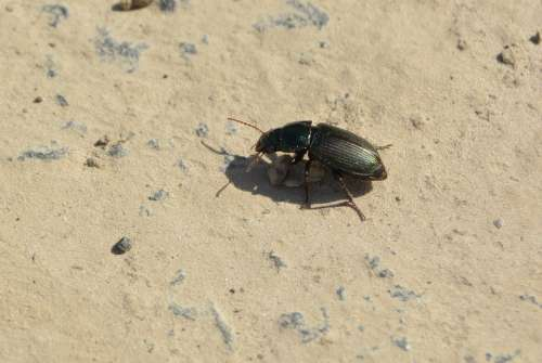 Beetle Away Stone Insect