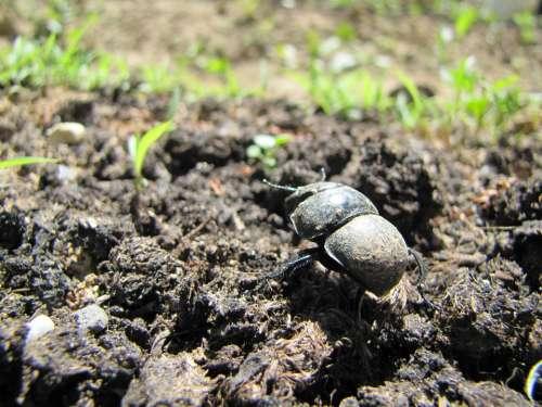 Beetle Earth Animal Insect Nature Arthropod
