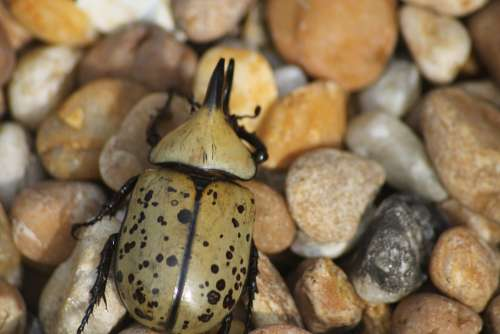Beetle Outdoor Nature Bug Insect Rock Wild