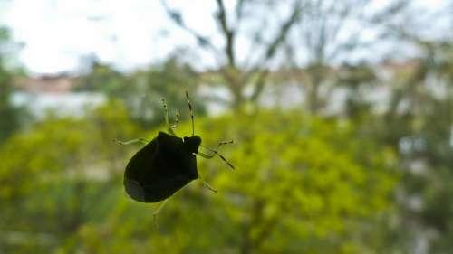 Beetle Glass Nature
