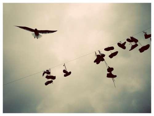 Belgium Bird Clothes Line Cord Shoes Sky Clouds
