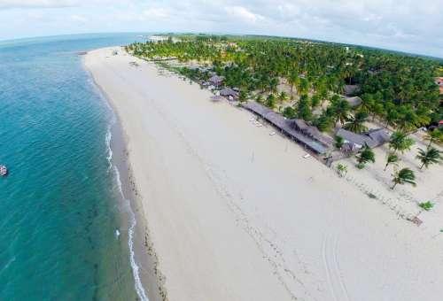Belt Louis Palm Tree Piauí Beach Beach Sand