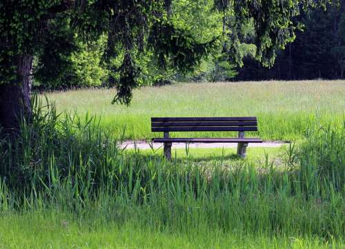 Bench Nature Bank Seat Rest Meadow Grass