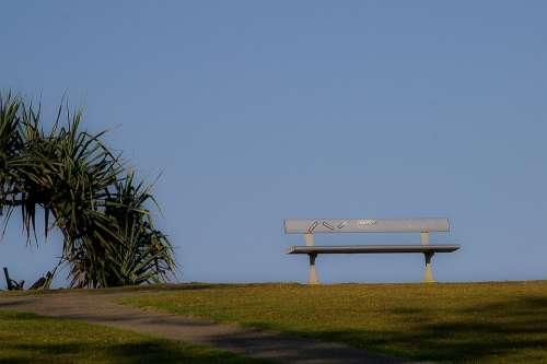Bench Seat Horizon Palm Tree Sky Blue Grass