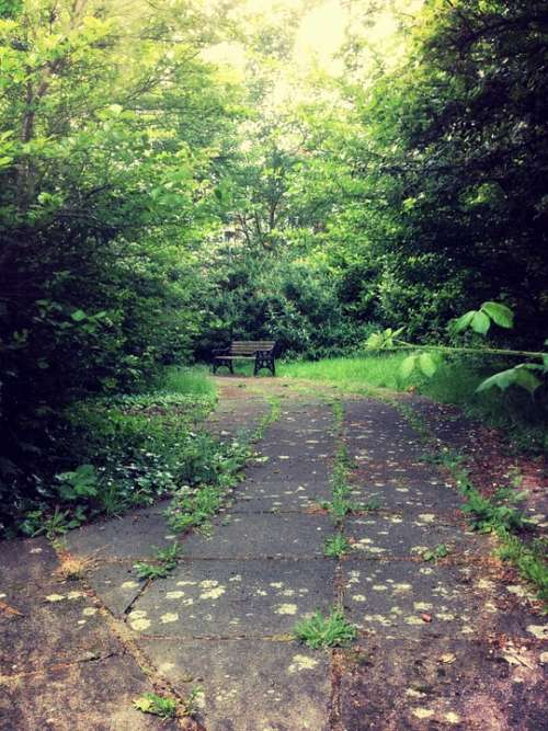 Bench Secret Nature Green Garden Park Sitting