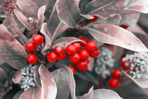 Berries Berry Red Leaves Silver Christmas