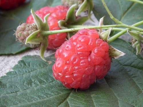 Berry Raspberry Fruit Red Sweet Fresh A Lot