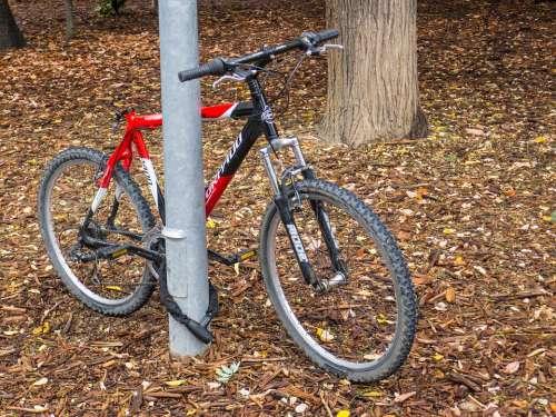 Bicycle Tree Bike Old Cyclist Padlock Autumn