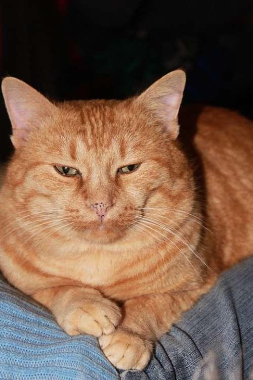 Big Cat Eye Garfield Head Kitty Orange Tabby