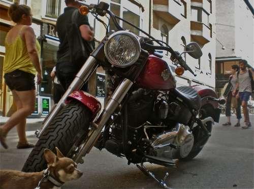 Bike Dog Pedestrian Traffic City Life Stockholm