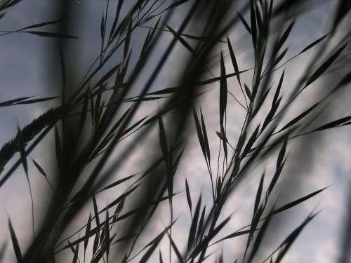Bill Grass Blades Of Grass Backlighting Oats Mood