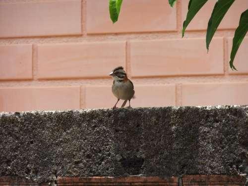 Bird Nature Birds