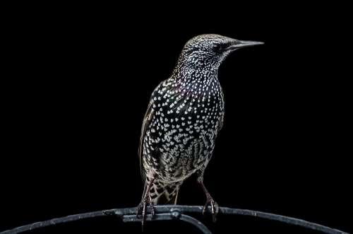 Bird Birds Aviator Animals Isolated Background