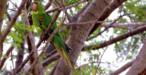 Bird Parrot Nature Maritaca Tropical Birds
