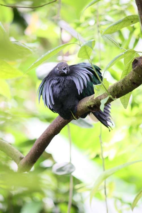 Bird Animal Nature Plumage Aufplustern Feather