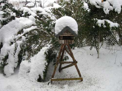 Bird Winter Aviary Snow Feeding