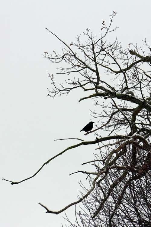 Bird Raven Sitting Branch Aesthetic Shadow