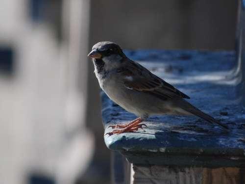 Bird The Sparrow Nature Pen