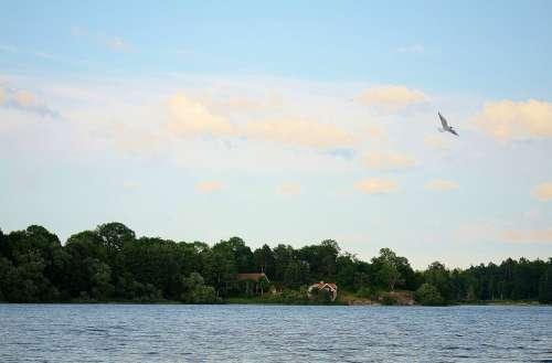 Bird Seagull Animal Water Bird Sea Coast