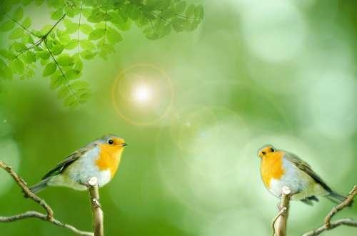 Bird Green Animals Aviator Wild Small Robin Sun