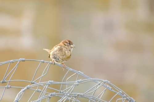Bird Animals Animal Feather Aviator Seasons