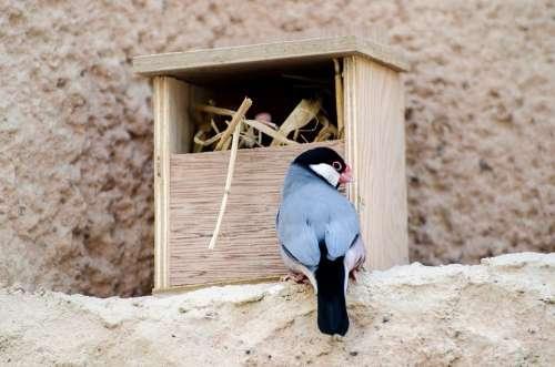 Bird Lonchura Island Natural Feather Finch