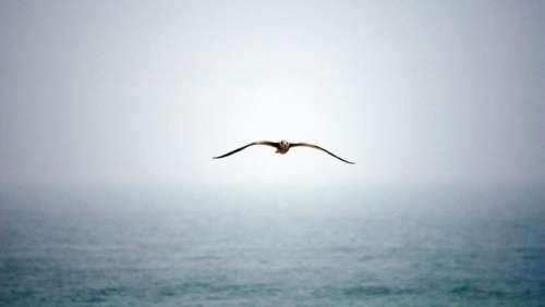 Bird Fly Wings