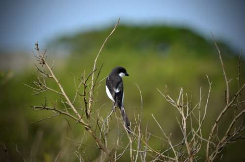 Bird Nature Wildlife Animal Africa South Africa