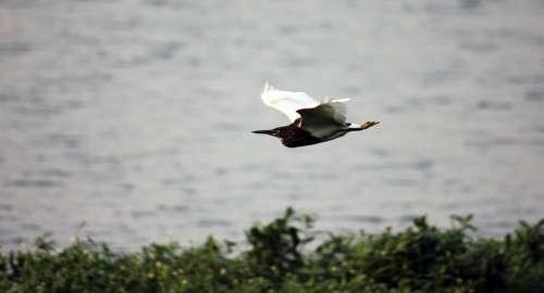 Bird Flight Motion Fluttering Wildlife Flying