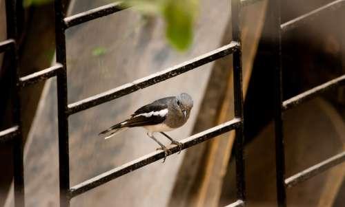 Bird Small Fence Iron