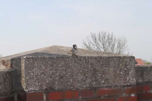 Bird Sparrow Animals