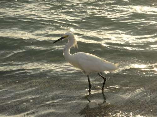 Bird Mar Beach
