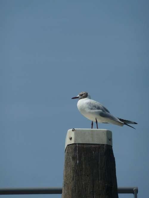 Bird Air Seagull Zealand Blue Nature
