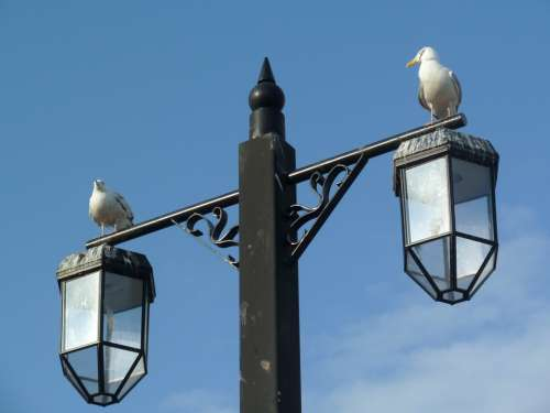 Bird Seagull Beach Wildlife Lamp