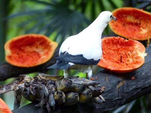 Bird Papayas Fruit Thailand