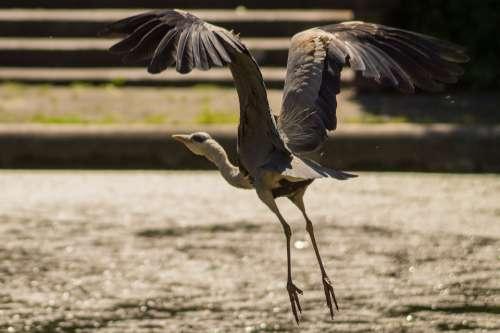 Bird Fly Wings Feather Wildlife Beak Wild