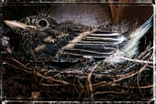 Bird Nesting Sparrow Nature Nest Animal Wildlife