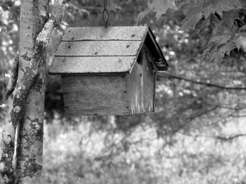 Birdhouse Nesting Bird Wood Outdoors