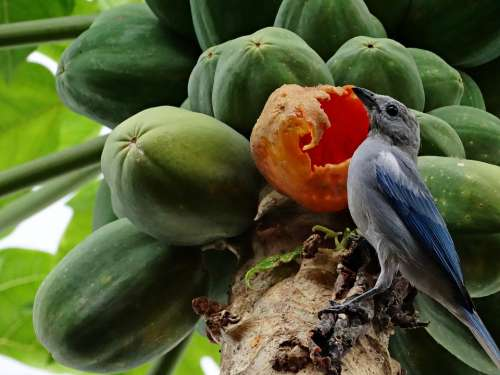 Birdie Nature Fruit