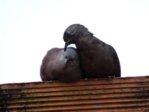 Birdie Love Nature