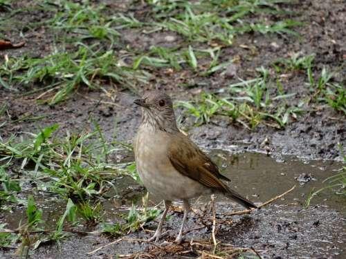 Birdie Nature Bird