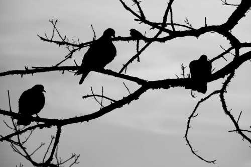 Birds Sky Tree