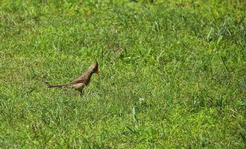Birds Grass Alone Single Nature