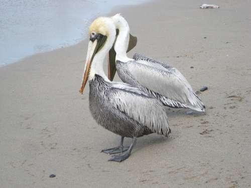 Birds Sea Sand Nature Ave Animal Bird