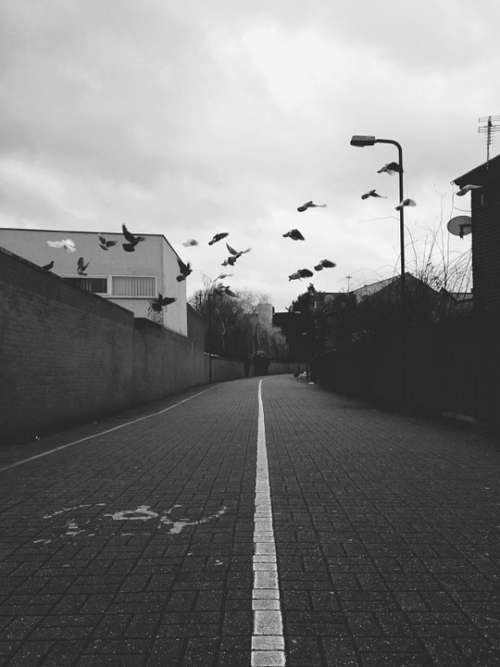 Birds Street Urban City District Road Path Fly