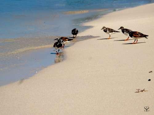 Birds Sea Ave Animals Sand Beach Nature Creature