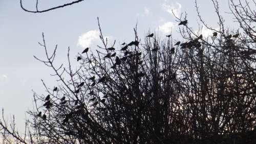 Birds Branch Nature