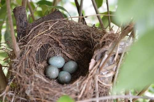Bird'S Nest Bird Nest Eggs Nature Natural